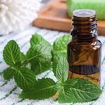 Peppermint -mentha piperita - Natural Willamette
